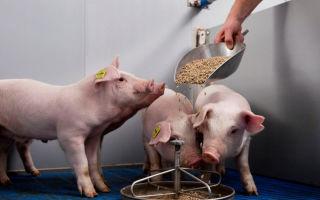 Овес для сельскохозяйственных животных