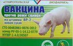 Какой сывороткой вакцинировать свинью от рожи