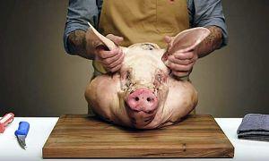 Как разделать свиную голову в домашних условиях