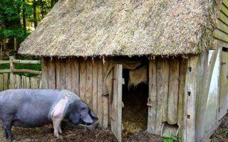 Как построить свинарник самостоятельно