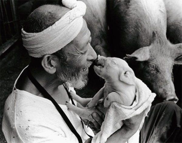 Дружба человека и свиньи
