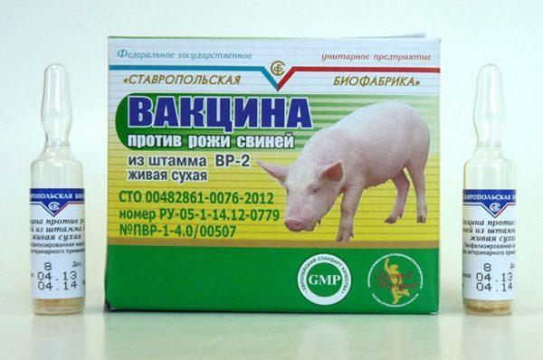 Вакцина от рожи свиней