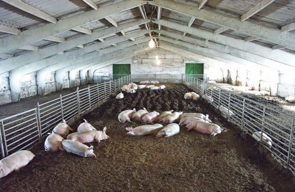 Ферма после АЧС