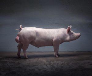 17 мерзких и; немного пугающих фактов о; размножении животных