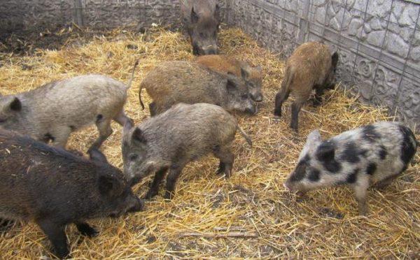 agriculture-animal-husbandry-hunt-farming-rearing-of-wild-animals-4.800.jpg