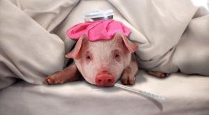 Свинья заболела