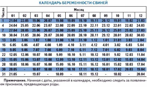 oporos-sviney-pervyy-raz-13.jpg