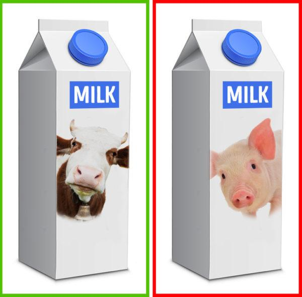Свиное молоко