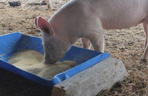 кормушка для свиньи своими руками