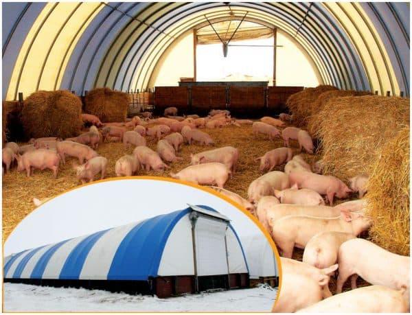 Пример канадсткой системы содержания свиней