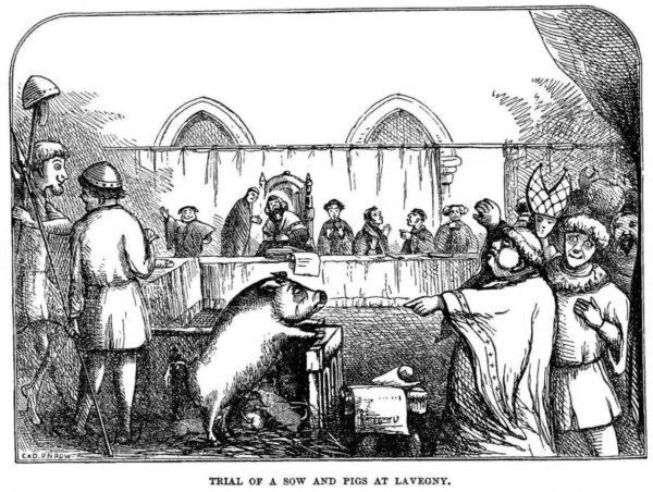 Суд над свиньей съевшей младенца