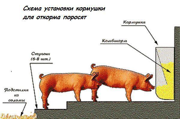 292_ustanovka-kormushki-dlya-sviney.jpg