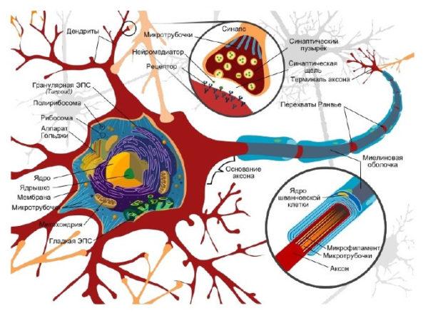 neiron.jpg