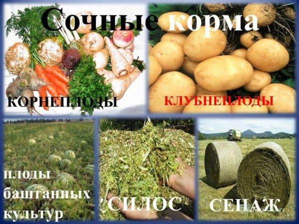 sochnye-korma-600x450.jpg